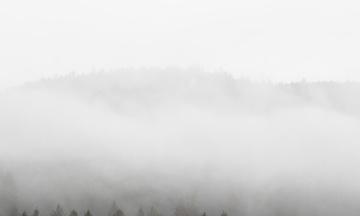 В Германии открыли дела на 400 экоактивистов, которые требуют не уничтожать леса