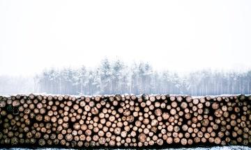 Порошенко подписал закон, который усиливает ответственность за вырубку и контрабанду леса