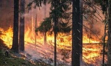 Під Берліном евакуювали 500 осіб через лісову пожежу
