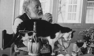 Учені зі США перевірили кішок на любов до людей. Виявилося, у цьому вони не поступаються собакам, але є нюанси