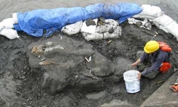 В Панаме ученые нашли родственника морской коровы, которому 20 млн лет