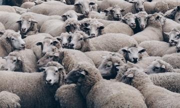 Обстежувати овець з Чорноморського порту в Вінницьку область вирушив глава Держпродспоживслужби