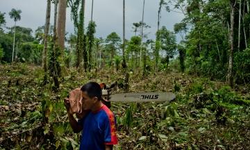 Вчені говорять про масштабне зникнення рослин через людину, але не можуть встановити їх приблизну кількість