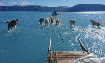 Вчений сфотографував собак, які йдуть по воді. Насправді вони біжать по льоду, який тане, — і це демонструє глобальне потепління