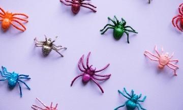 В Англії павуки рік лякали жителів міста колисковою з фільмів жахів