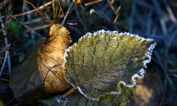 У Чехії через заморозки встановлений рекорд. Температура впала до -8,5 градусів