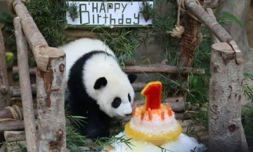 В Малайзии отметили первый день рождения панды, появившейся в неволе. Через год ее отправят в Китай