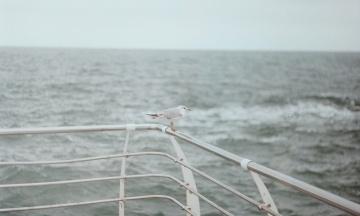 Росія закрила три ділянки Чорного моря до кінця жовтня