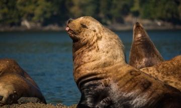 Тюлень жбурнув восьминога в обличчя каякеру, який катався на човні біля берегів Нової Зеландії