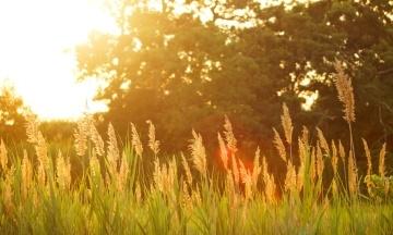 Прогноз погоды на выходные: грозы и жара отступят, в Карпатах до +11 °С
