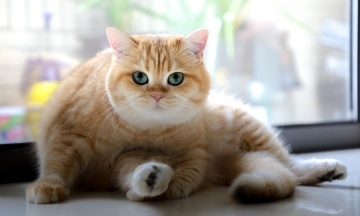 У Південній Кореї на коронавірус тестуватимуть домашніх котів та собак