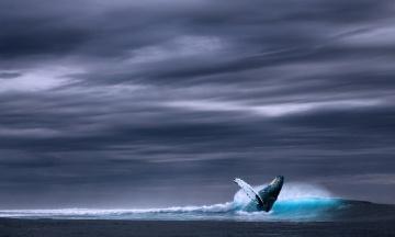 Ученые выяснили, что голубые киты умеют менять репертуар своих «песен»