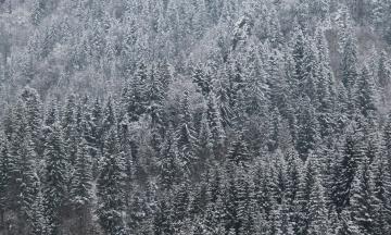 В США бушует снежный шторм. Погибли уже шесть человек, дороги перекрыли и отменили часть авиарейсов