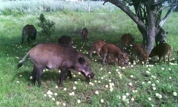 «Древо життя»: У Чорнобильській зоні тварини збираються на галявині, щоб перекусити. Фото
