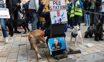 Сотні собак пройшли центром Лондона на знак протесту проти Brexit. Фотографія