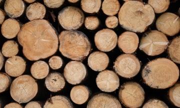 Арбитраж вынес решение в споре между ЕС и Украиной вокруг запрета на экспорт леса-кругляка