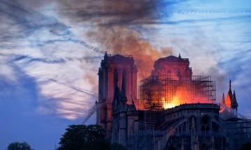 Бджоли, що живуть у соборі Паризької Богоматері, вижили після пожежі