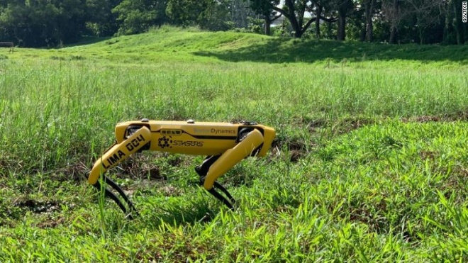У Сінгапурі робот-собака патрулюватиме парки. Він стежитиме за соціальною дистанцією