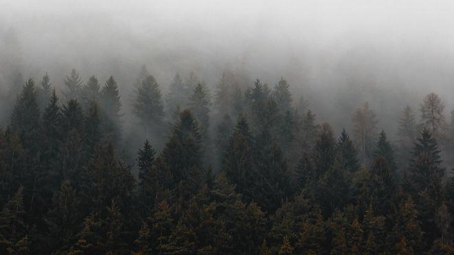 У Німеччині порушили справи проти 400 екоактивістів, які вимагають не знищувати ліси