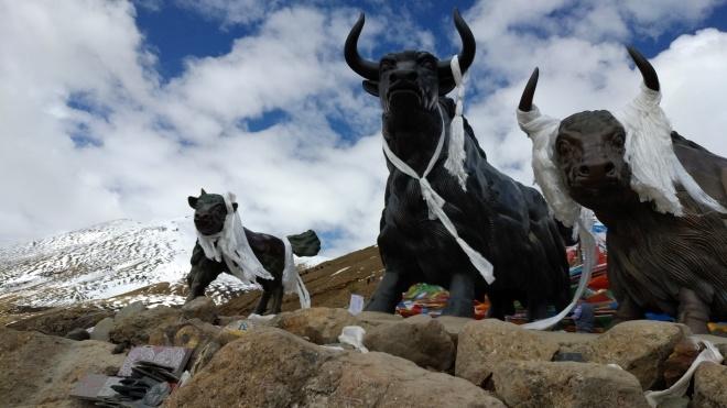 «Коммунизм — в партии, а мы деньги хотим зарабатывать». Репортаж из закрытого Тибета. Часть 2