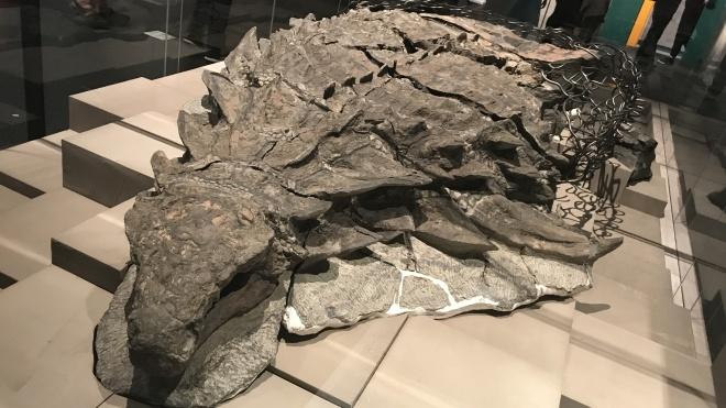 Ученые исследовали содержимое желудка динозавра, который пролежал в иле миллионы лет, и выяснили его рацион