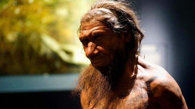 Европейские ученые вырастили мозг из стволовых клеток северных европейцев, богатых генами неандертальцев