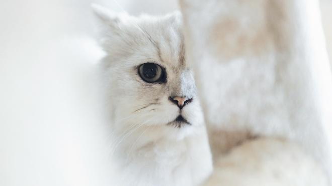 В Великобритании запретили продавать щенков и котят в зоомагазинах