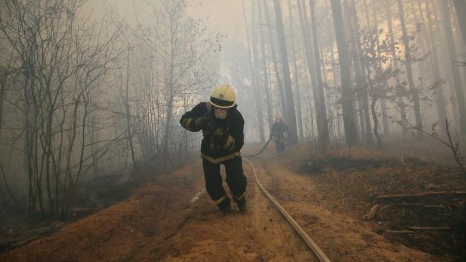 «Уважно стежу». Зеленський прокоментував пожежі в Чорнобильській зоні відчуження
