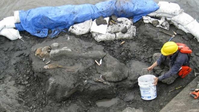 У Панамі науковці знайшли родича морської корови, якому 20 млн років