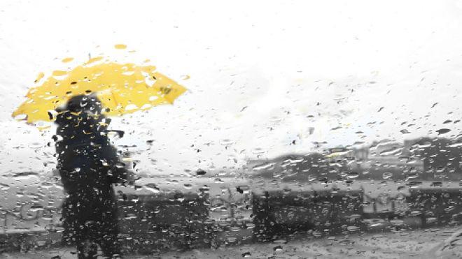 Дослідження: Висадка дерев може збільшити частоту дощів