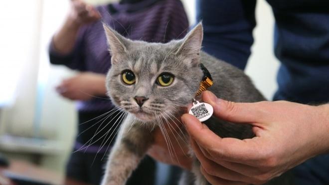 В Киеве запустили единый реестр домашних животных. Собак и кошек оснастят QR-кодами