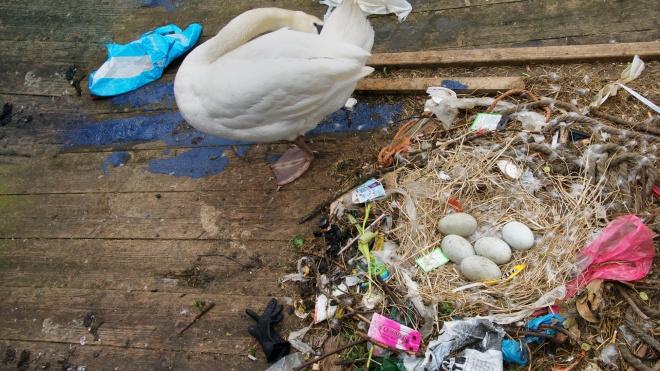 Пластик — це величезна проблема для екології, але боротьба з пластиковими трубочками її не вирішить.  Переказуємо колонку видання Quillette