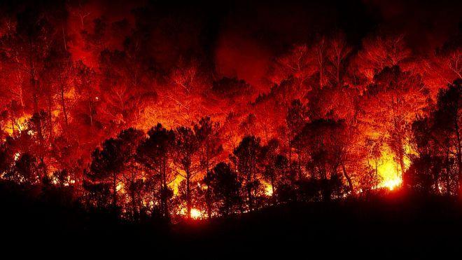 В Греции возросло число жертв лесных пожаров. Стало известно об украинцах
