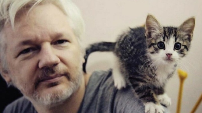 Ассанж відмовився від свого кота, оскільки побоювався за його безпеку