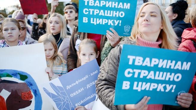 «Україна не перша країна, яка проходить цей шлях». Кабмін схвалив заборону використання диких тварин у цирках