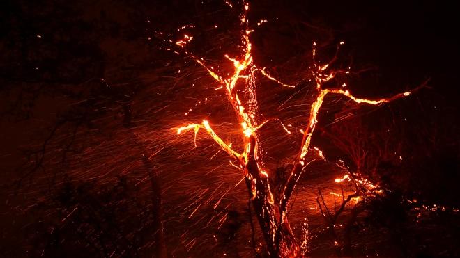 На Кипре бушуют сильные лесные пожары. Власти просят о международной помощи