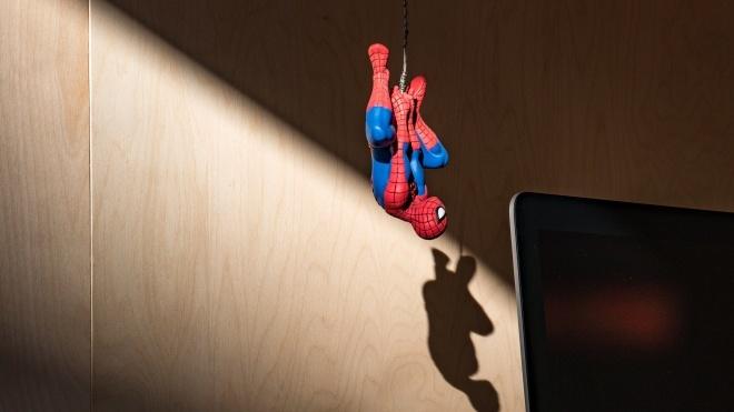 «Почему ты не умрешь?» В Австралии полиция приехала на вызов из-за криков на паука