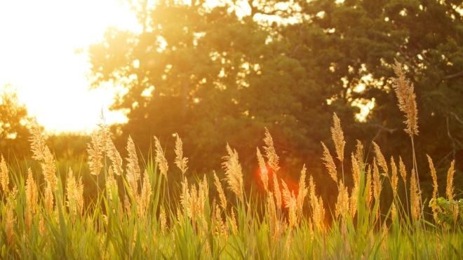 «Климатическая норма»: в Укргидрометцентре спрогнозировали погоду на июнь