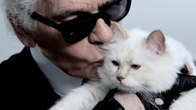 «Вона спадкоємиця». Кішка Лагерфельда може стати мультимільйонером