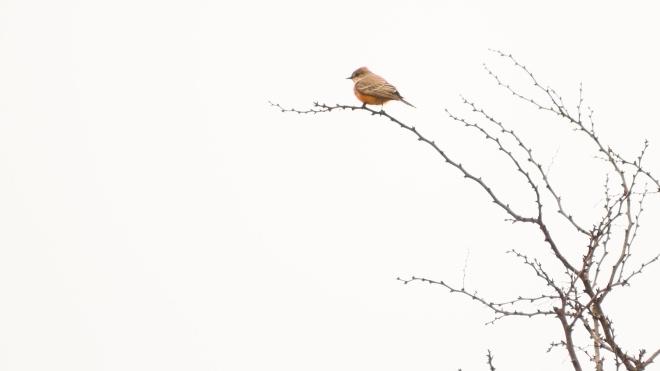У Міннесоті птахи почали врізатися в машини. Поліція заявила, що пернаті п'яні