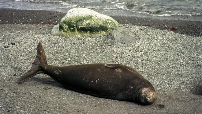 Антарктида постепенно зеленеет. Климатические изменения приводят к возникновению новой экосистемы