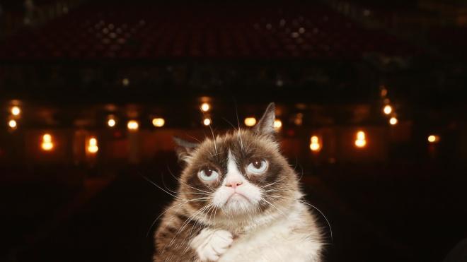 У США померла кішка-мем Grumpy Cat. Їй було сім років