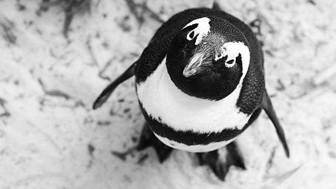Brexit ставит под угрозу выживание пингвинов. Группы защиты дикой природы очень обеспокоены
