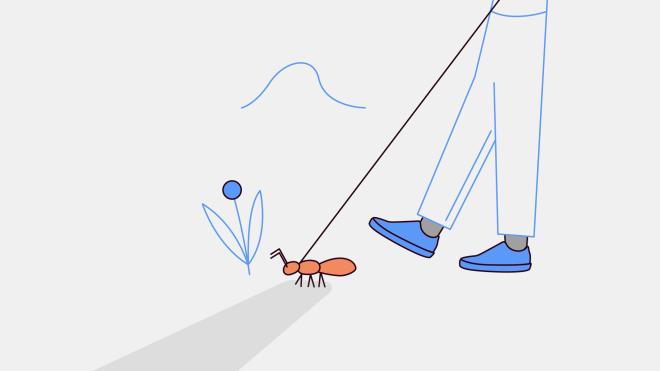Ребенок просит купить муравьиную ферму. В чем смысл и сколько мне это будет стоить?