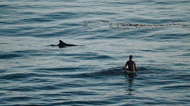В Египте на курорте Марса-Алам акула напала на дайвера из Чехии. Мужчина погиб