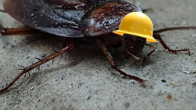 В Китае в промышленных масштабах разводят тараканов. Зачем?