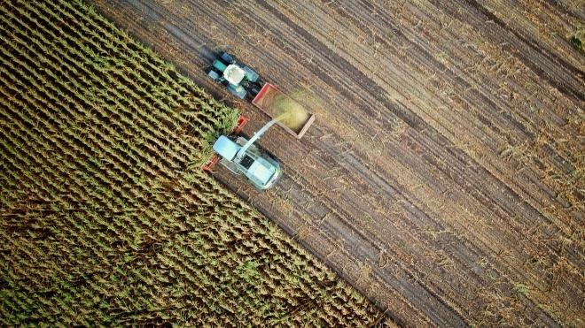 В Минагрополитики показали статистику рынка земли за полмесяца — заключили 880 сделок