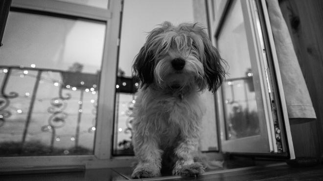 Собаки тоже хотят расслабиться: в мире растет рынок зоотоваров с марихуаной — пересказываем материал Bloomberg