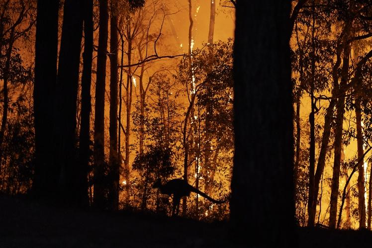 Масштабные лесные пожары в Австралии, 15 ноября 2019 года.