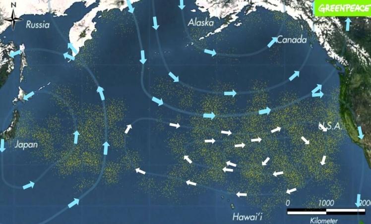 Сміттєвий континент, або Тихоокеанська «сміттєверть» — скупчення відходів в океані. Тварини приймають залишки пластику за їжу, це призводить до їхньої загибелі.